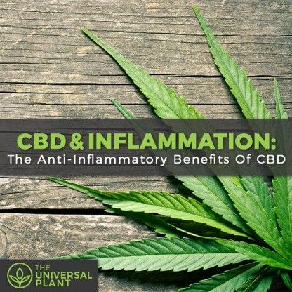 image: cbd and inflammation: The universal plant