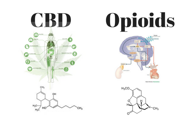 two medical diagrams_ one of CBD and the other of Opioids