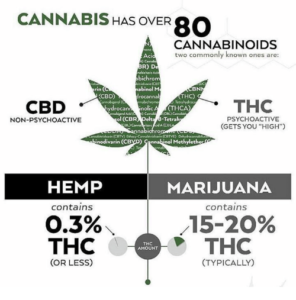 Cannabis has over 80 Cannabinoids illustrated diagram