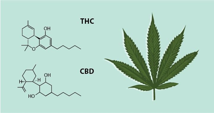 The THC and CBD molecules paired with an illustration of a marijuana leaf